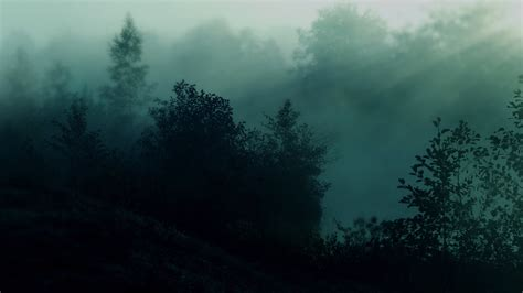 forest during nighttime hd aesthetic wallpapers hd