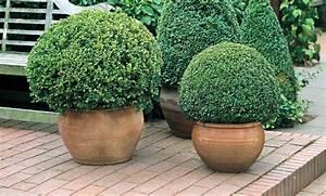 Buchsbaum Schablone Kaufen : geh lz buchsbaum kugel online kaufen otto ~ Watch28wear.com Haus und Dekorationen