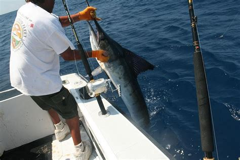 Marlin Jumps In Boat by Wordlesstech Blue Marlin Jumps Into The Boat