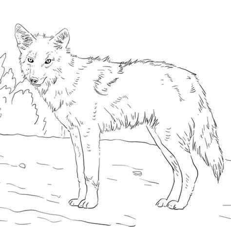 american jackal coyote coloring page  printable