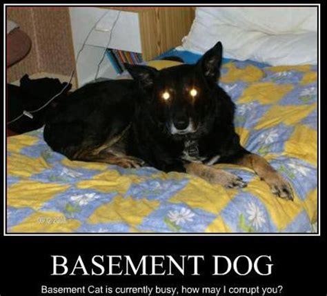 Basement Dog By Teleoceras On Deviantart