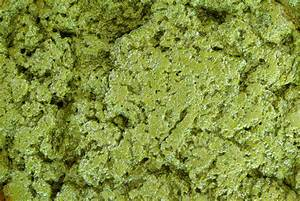What Is Chlorella Microalgae  U2013 Bio