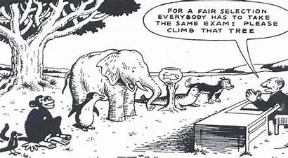 Fair Education Selection Climb Tree Test Fairness