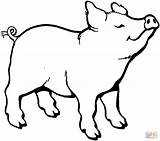 Coloring Pig Pages Smells Something Printable Pigs Colouring Sheets Animal Clipart Paper Muddy Dot Drawings sketch template