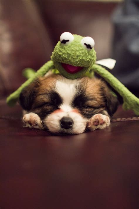 Kermit the Dog as a Puppy