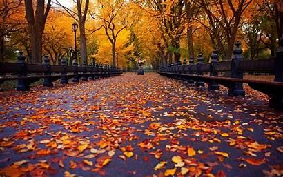 Autumn Nyc York Park Bench Nature Trees