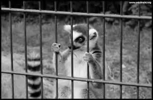 Sad Zoo Animals in Cages