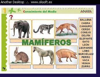 ciclo de primaria animales mamiferos