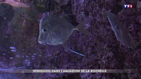 en immersion dans l aquarium de la rochelle l un des plus