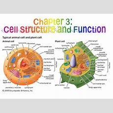 Cell Structure And Function  Ppt Download