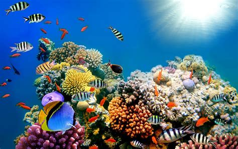 coral reef wallpaper 50 best aquarium backgrounds free premium templates Underwater