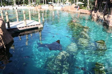 IN THE RAY POOL   Picture of Discovery Cove, Orlando   TripAdvisor