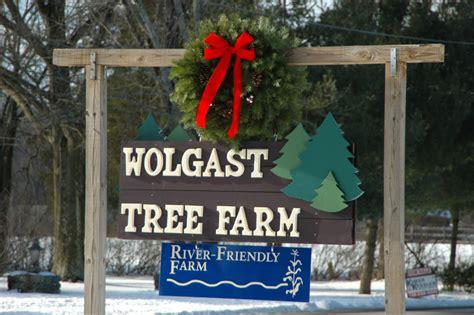 christmas tree farm somerset nj wolgast tree farm trees bluebird boxes local honey