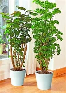 Plante D Intérieur Haute : arbuste interieur ~ Premium-room.com Idées de Décoration