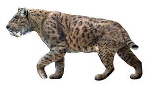 saber toothed cat file smilodon fatalis jpg wikimedia commons