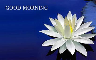 Morning Wishes Flower Lotus Amazing Quotes Mobile
