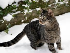 ferrel cat caring for feral cats in the winter