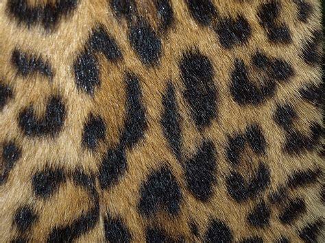 leopardenfell wiktionary