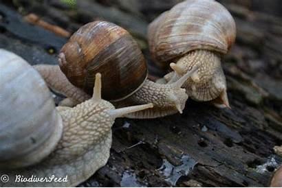 Snail Husbandry Escargot Garden Escagot Helix Socialising