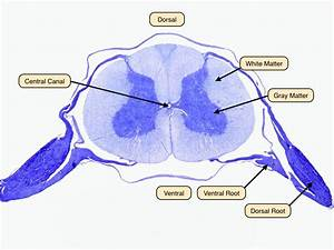 32 Label The Parts Of The Nerve