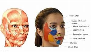 How To Get Super Model Cheek Bones By Tongue Posture