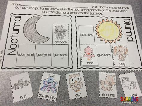 nocturnal animals sharing kindergarten