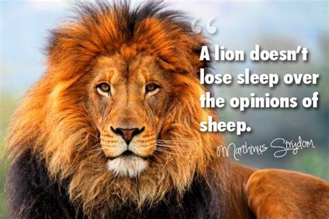 inspirational quotes lion lioness quotesgram
