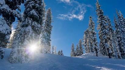 Snow Winter Forest Background Trees 4k Sunlight