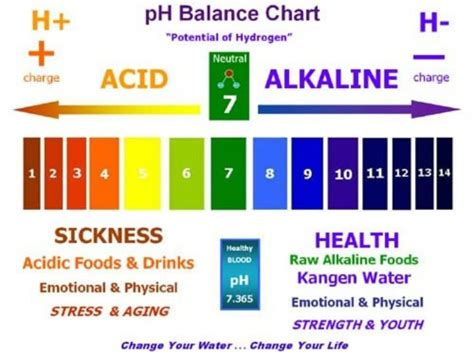 List of Alkaline Foods   The pH Balanced Diet   In5D Esoteric, Metaphysical, and Spiritual