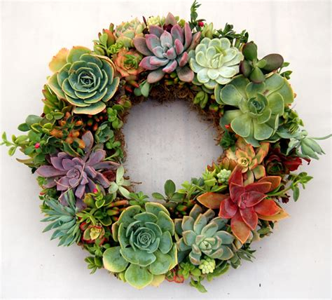 succulent wreath living wreath sphagnum moss 15 quot outside diameter round or