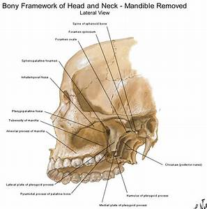 Dentistry Lectures For Mfds  Mjdf  Nbde  Ore  Diagrams Of