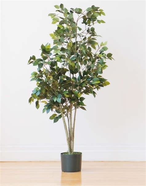 Low Light Indoor Trees by 8 Indoor Plants You Can T Kill Interior Indoor Tree