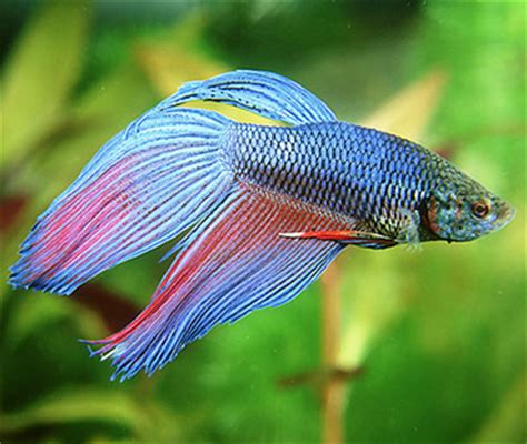 fish living years pets blog