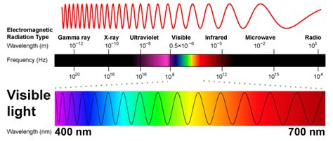 Frequency Of Visible Light by Photosynthesis 3 Light And Pigments Sciencemusicvideos