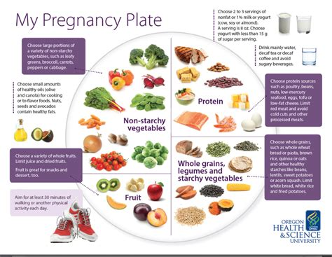 My Pregnancy Plate A Blueprint For Healthy Eating