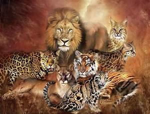 Cat Power Cats