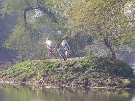 the india blog bharat expedition bharatpur bird