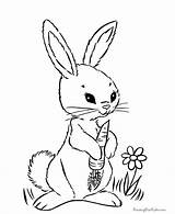 Easter Coloring Bunny Rabbit Printing sketch template