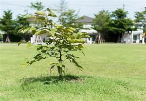 Kleine Bäume Für Vorgarten : b ume f r den garten ~ Michelbontemps.com Haus und Dekorationen