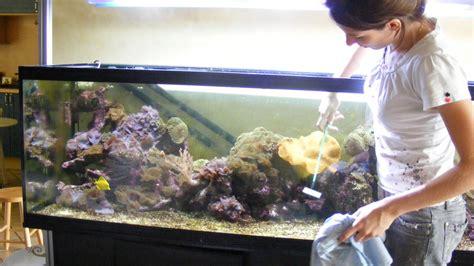 quand et comment nettoyer aquarium