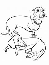 Dachshund Coloring Printable Colors sketch template