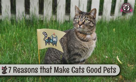 cats pets cat why reasons kittens animals