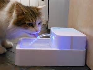 water fountains for cats ultraviolet light purifies water for pets