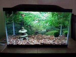 Deco Aquarium Zen : zen fish tank google search fish tank ideas tips and ~ Melissatoandfro.com Idées de Décoration