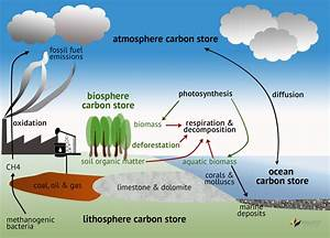 Carbon Cycle Drawing At Getdrawings