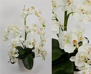 Künstliche Orchideen Im Topf : orchideen arrangement deluxe wei im wei en dekotopf dp k nstliche orchidee ebay ~ Watch28wear.com Haus und Dekorationen