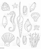 Coloring Shells Adults Drawn Shell Seashell Abstract Adult Animal Different Markings sketch template