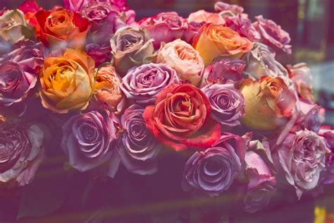 Pink Rose Photography Tumblr Kichijoji Eikaiwa Info