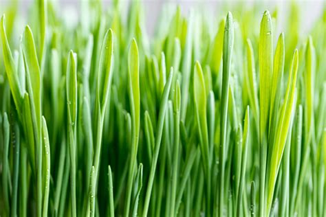 9 Lawn Maintenance Tips for Year-Round Green Grass | Weed ...