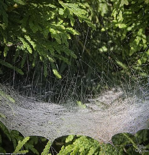 la plus grande toile d araign 233 e du monde la vie et la science